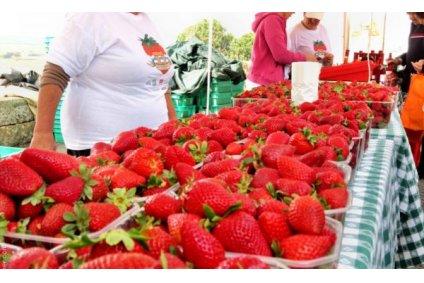 Strawberry Festival English School Malta GSE (2)